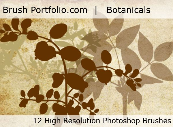 Free Photoshop brushes Botanical Brushes