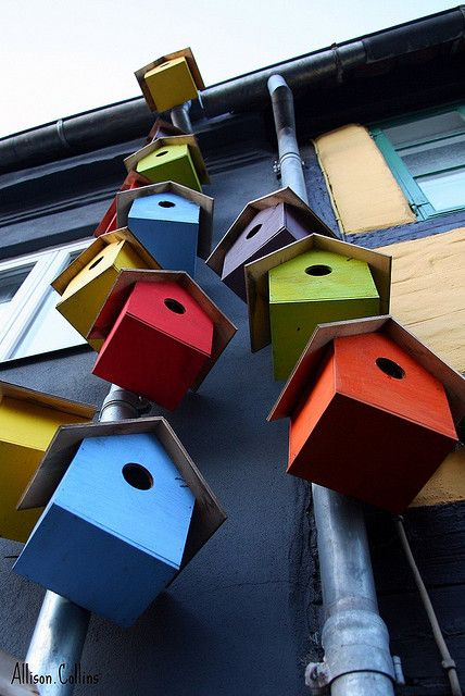 Brightly colored bird houses (i kinda just like these plain ones painted bright colors)