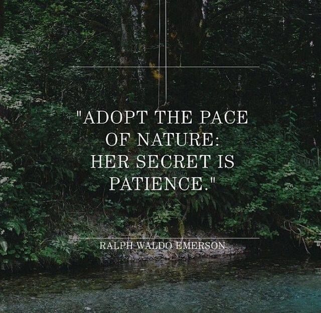 Ralph Waldo Emerson quotes to live by.