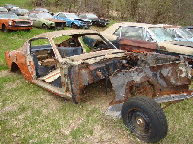Graveyard Of Ford Mustangs