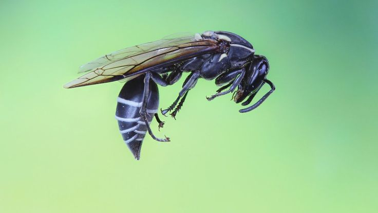 Brazilian Wasp Venom Cures Cancer within Seconds?! #youtube #cancer