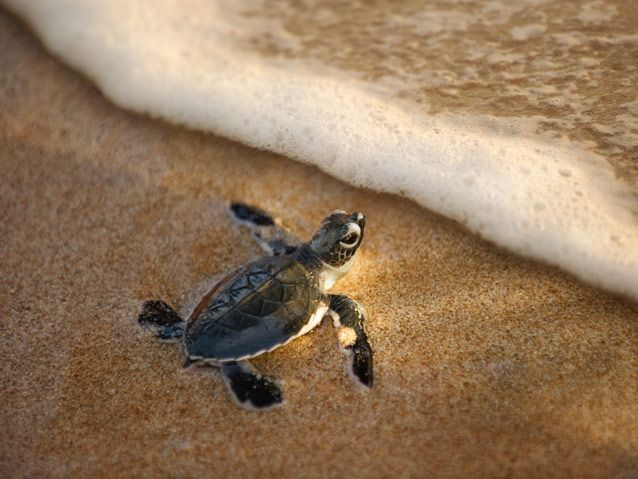 Visit the turtle hatcheries in Kasgoda and let your children experience something truly wonderful.. Read more about the beautiful turtle hatching experience