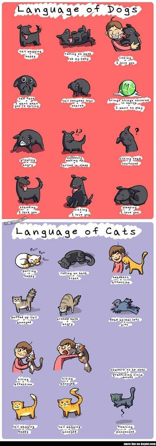 Language of Cats and Dogs - DayLoL.com - Your Daily LOL and Entertainment!