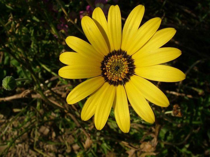 Looking For Alaska Flower: 28 Best Images About Strange Looking Flowers On Pinterest