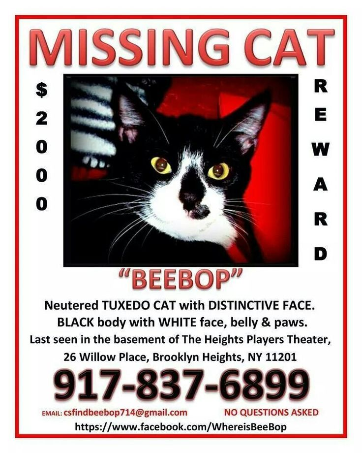 192 best LOST MISSING OR STOLEN PETS images on Pinterest Find - missing pet template