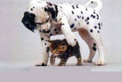 Cute Pets 4U: Cute Cats and Dogs Pictures