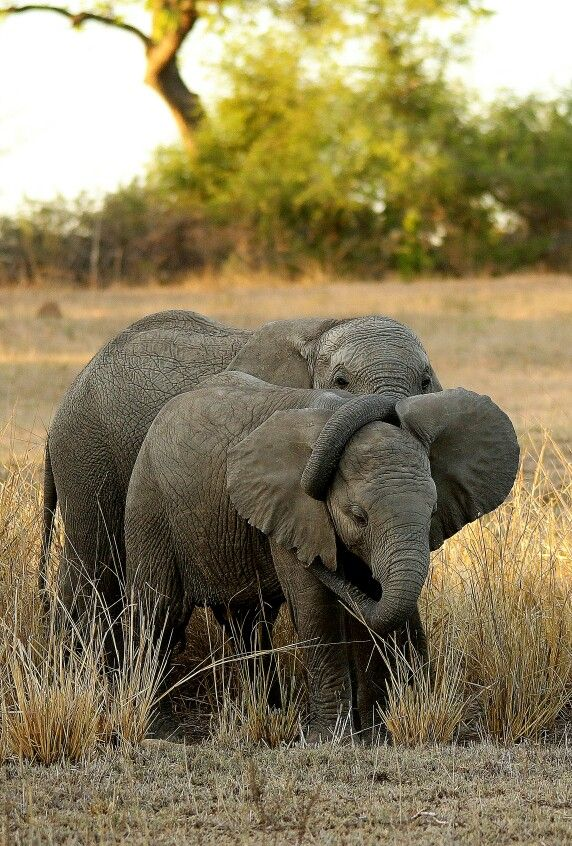 Too cute for words... baby elephants - some TLC.