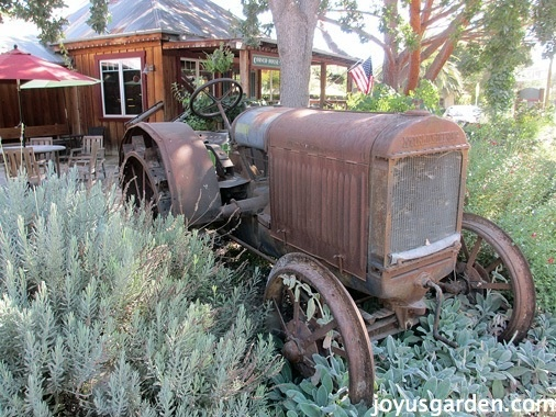 An old tractor set to rest in Lavender - love it!