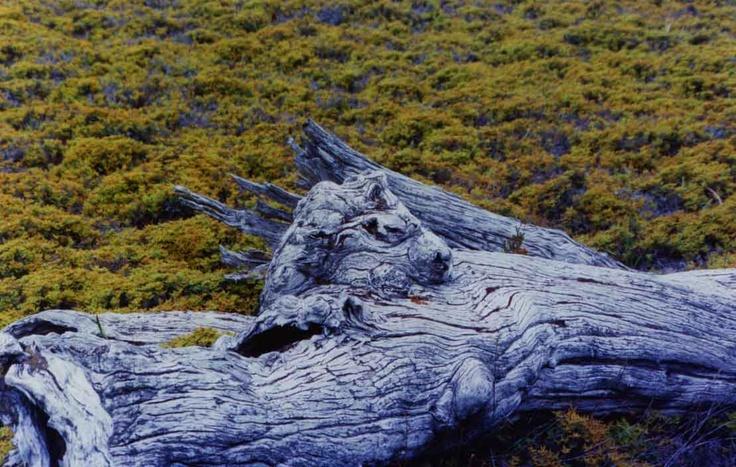 Mystical Horse, Cradle Mountain, Tasmania
