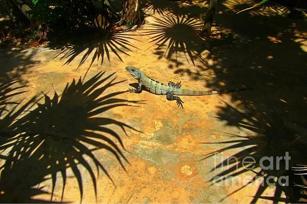 Cool iguanna in mexico. Great vacation photo!