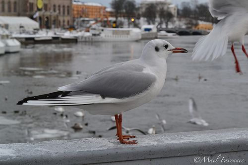 23/01/2013 #STOCKHOLM #SWEDEN #NIKON #D3100 #PHOTOGRAPHY