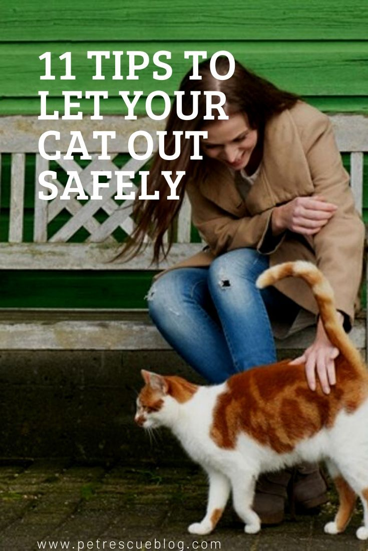11 Tips To Let Your Cat Out Safely Cats Outside Cats Cat Call