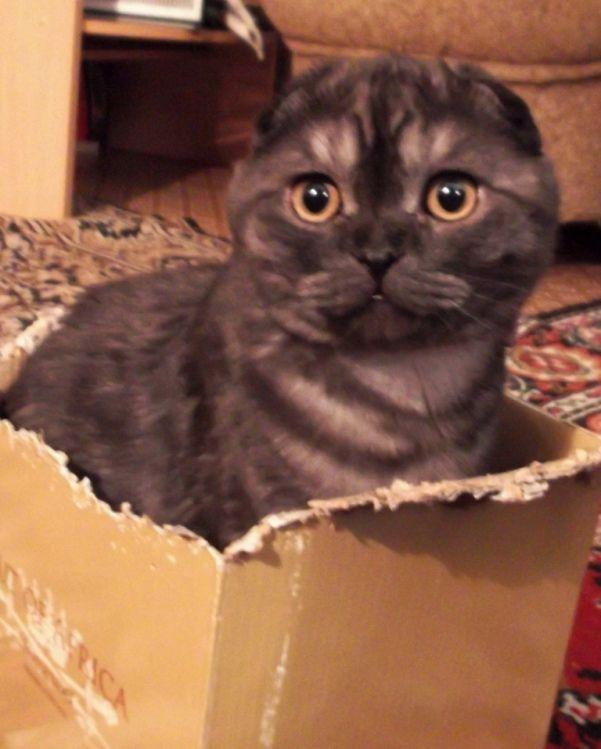 Любовь к коробкам-это навсегда...