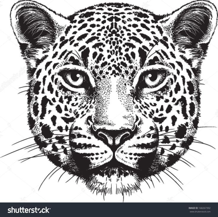25+ best ideas about Tiger face drawing on Pinterest | Spirit ...