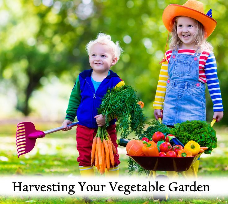 Be your own gardening expert hessayon