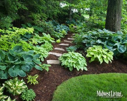 A variety of Hostas bloom in the shade of tall trees at this Midwest homeowner's garden.  So love Hostas!!