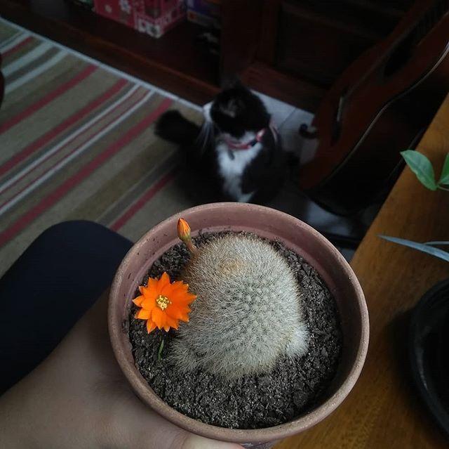 Uma Cacto Uma Flor E Uma Gata Algo Seco Algo Lindo E Algo Vivo Eu