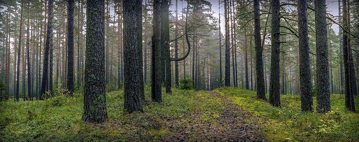 Пестовский район, Новгородская область, Россия