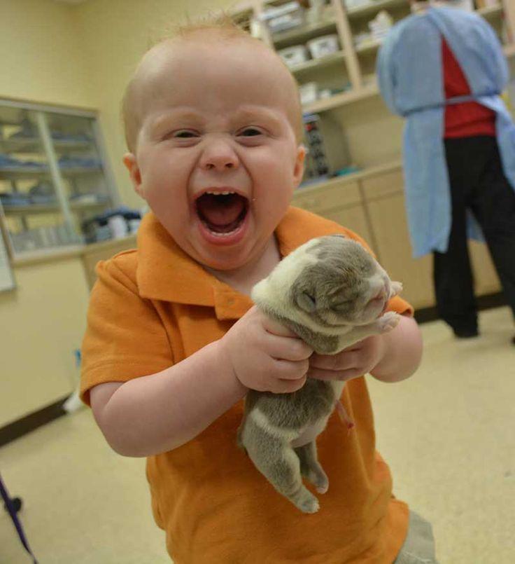 Happy boy holding newborn english bulldog puppy