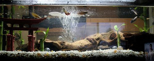 Aquarium Low Ph In 2020 Aquarium Home Aquarium Aquarium Driftwood