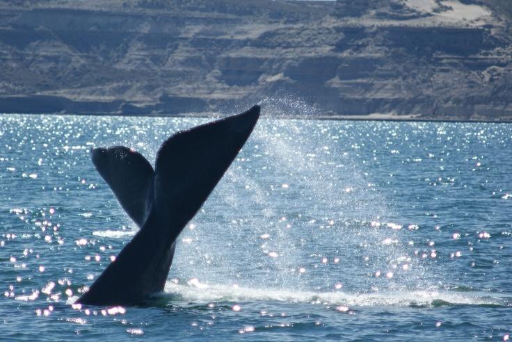 La mejor postal de Puerto Madryn