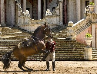 Portuguese School of Equestrian Art - Queluz Palace - Portugal; Palece Known as the little Versailles