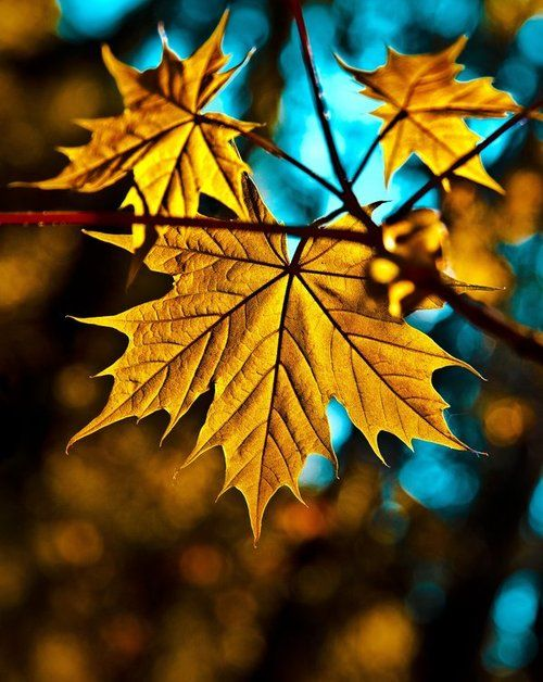 Colors of Autumn Leaves - #fallcolor