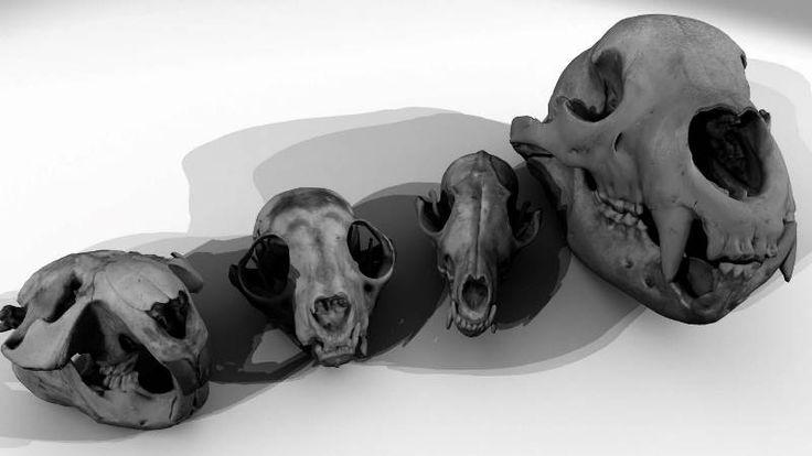 skany 3D interaktywne muzeum