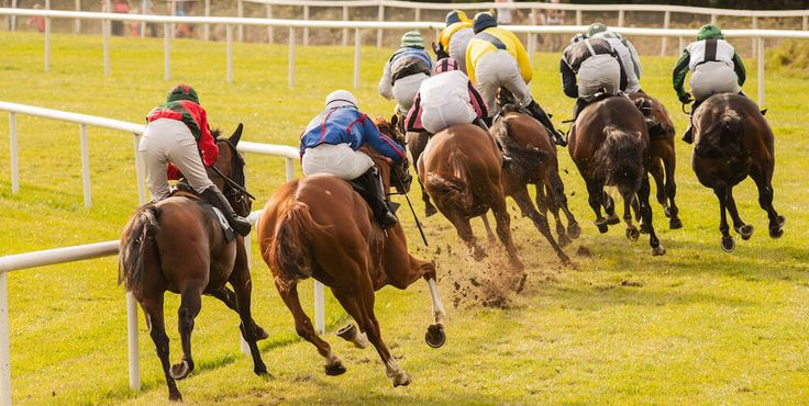 Big Race Bookie Busters | Betting Gods created by Tom Nelson, Professional Sports Tipster
