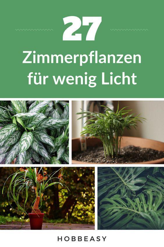 In diesem Artikel stellen wir dir 27 Zimmerpflanze…