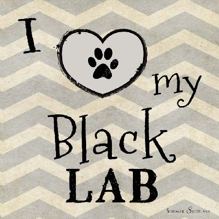 I Love My Black Lab Dog by Summer Snow