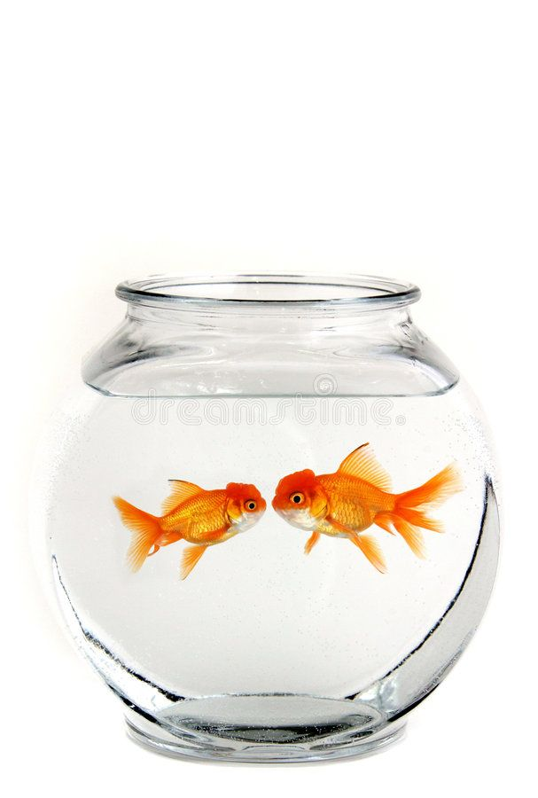 Two Kissing Goldfish Two Goldfish In A Bowl Kissing Ad Kissing Goldfish Bowl Ad Goldfish Bowl Free Vector Graphics Goldfish