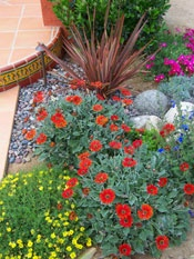 Colorful Xeriscape