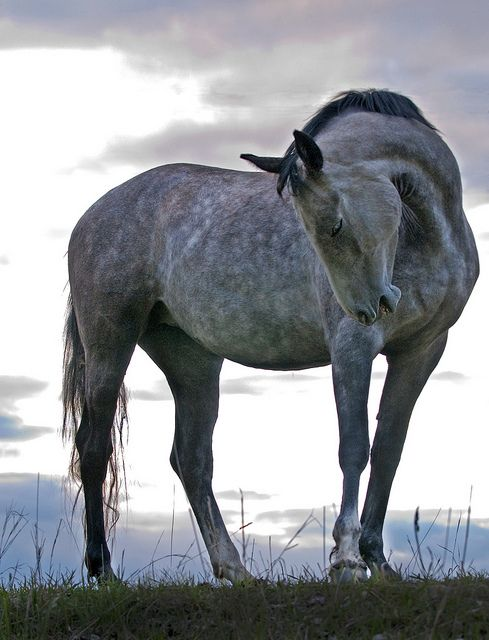 Grey horses are the most beautiful horses of them all.