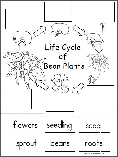 Best 25 Bean Plant Ideas On Pinterest