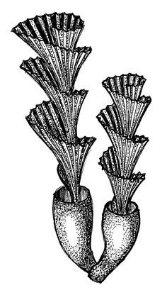 Zentangle sea plant | Zentangle | Pinterest | Plants and ...