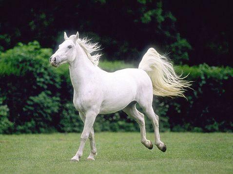wow i cavalli sono i miei animali  preferiti.  wowowowowowowowowowowowowowowowo..........................................................................