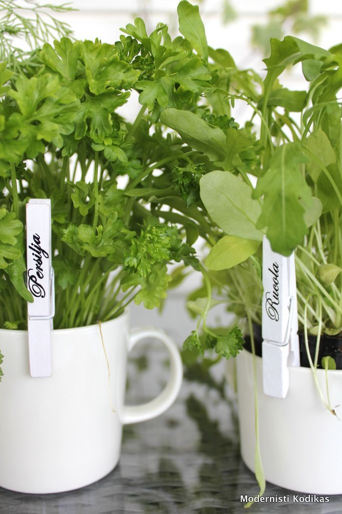 herb markers ..