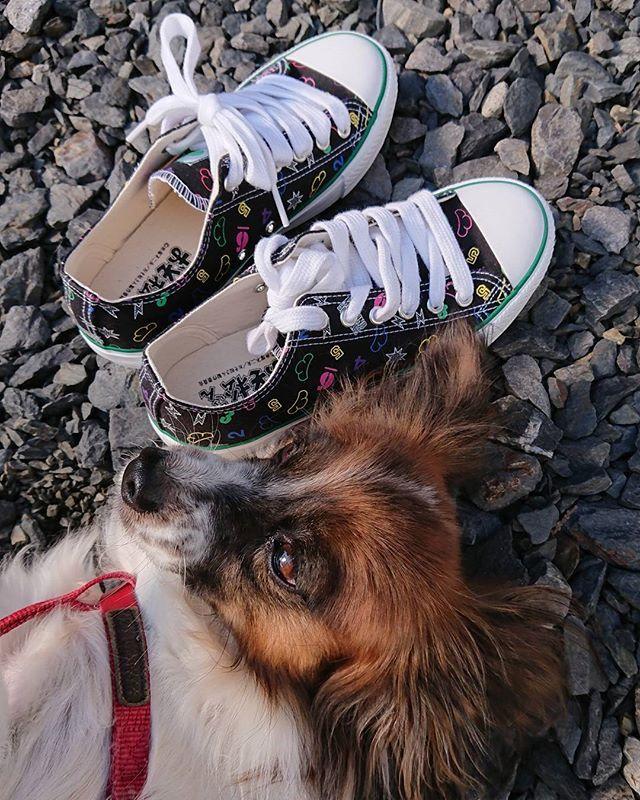 1900円が1330円だった! 松ソックスほしくなってきた🤣 #おそ松さん #スニーカー #まさかの #レジにて割引 #しまむら #愛犬 #パピヨン