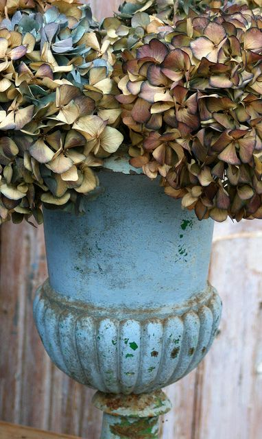 beautiful blue urn with dried hydrangeas in shades of brown, beige, blue: