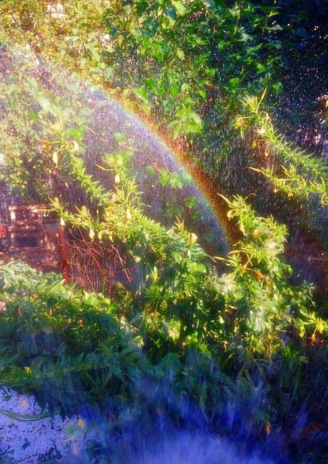 Magic garden, rainbow Photography by Zazulete