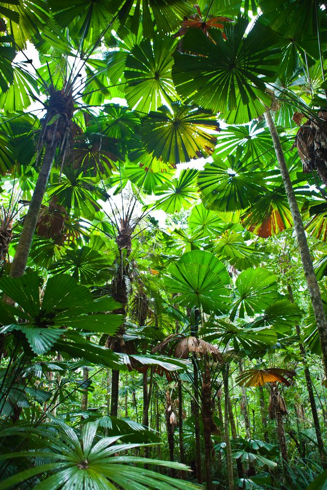 Bosque Tropical ~ Tropical Forest