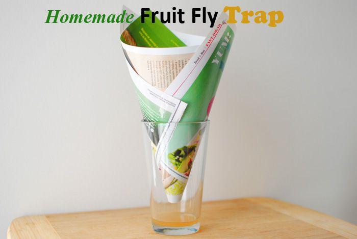 fruit flies vinegar peaches fruit