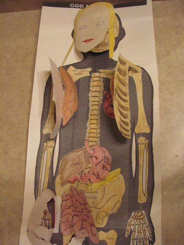 Artery System Human Body