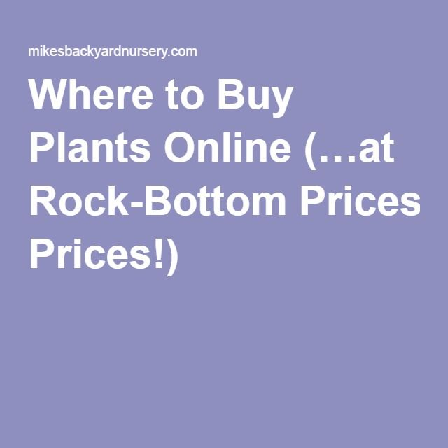 Where to Buy Plants Online (…at Rock-Bottom Prices!)