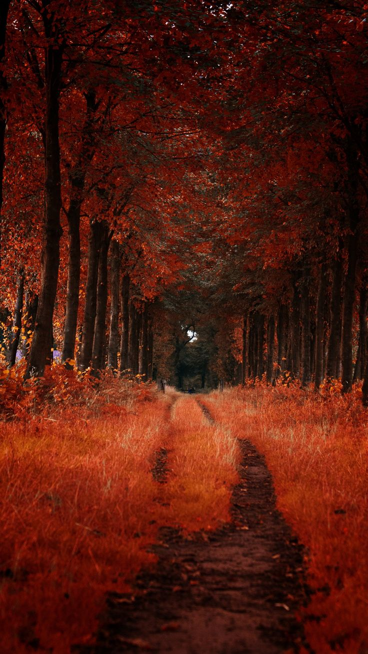 Autumn Trail by Ingmar Hoogerhoud