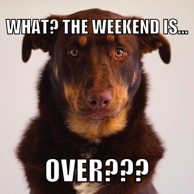 What ? The Weekend is... over ? https://www.facebook.com/dcbpets Dr. Chris Brown