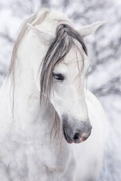 (83) I Love Horses - Photos
