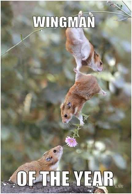 Wingman of the year.Valentine'S Day, Teamwork, True Friends, So Cute, So Sweets, True Love, Cute Animals, Baby Animals, Funny Animal