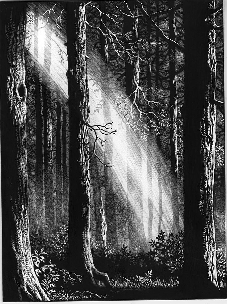 Illustrations in scratchboard for THE GOLDEN KEY, a Victorian fairy tale by George MacDonald:  from Ruth Sanderson's Golden Wood Studio - Welcome